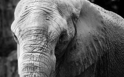 https://www.saluteinternazionale.info/wp-content/uploads/2020/02/elefante-400x250.jpg
